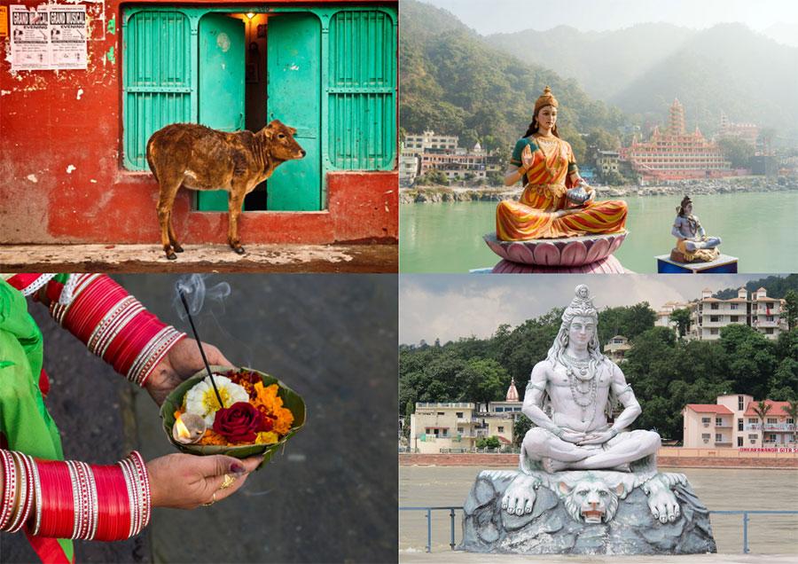 God Cow Rishikesh